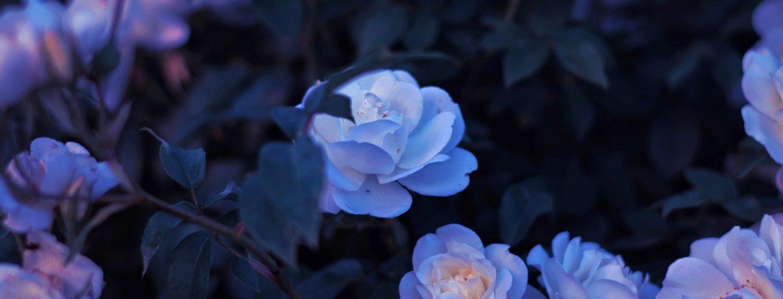 blomster, rabat